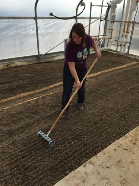 FST student, Amber Webb, uses a pinpoint seeder to seed a bed in the solar high tunnel.